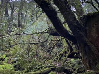 屋久島「白谷雲水峡から縄文杉」1日で回るルートを完全ガイド